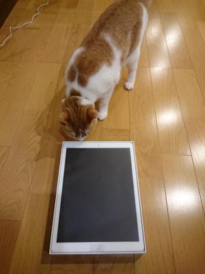 iPad-PRO-12.9-docomo-1.jpg