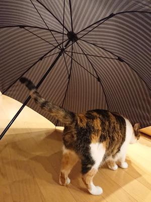 umbrella-201809-1.jpg